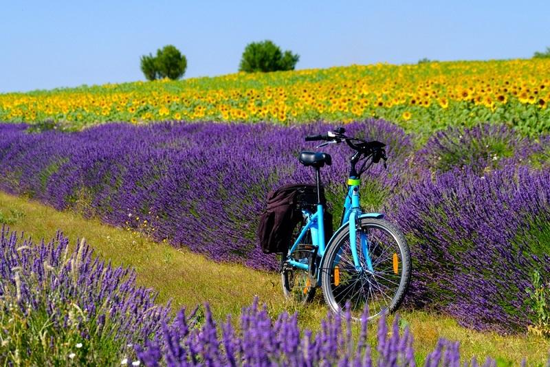 Das Hinterland der Cote d'Azur lädt ebenfalls mit schönen Radwegen zu Erkundungstouren ein. Hochebenen und Lavendelfelder lassen die Urlauber freier atmen. (#03)